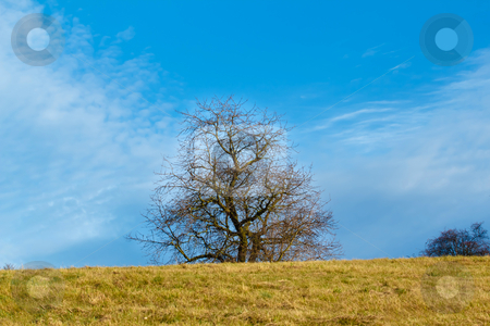 Nice autumn landscape with trees and blue sky stock photo, Nice autumn landscape with trees and blue sky by Artush
