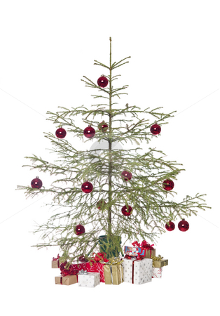 Christmas tree stock photo, Christmas tree isolated on a white background by Anne-Louise Quarfoth