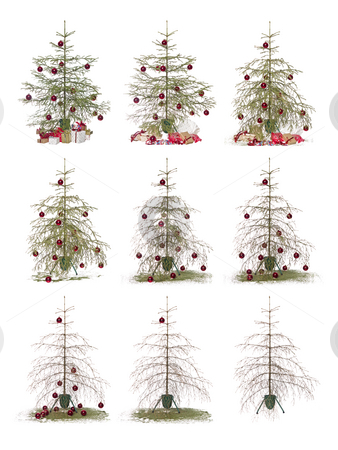 Time lapse - Christmas tree stock photo, Time lapse - Christmas tree isolated on a white background by Anne-Louise Quarfoth