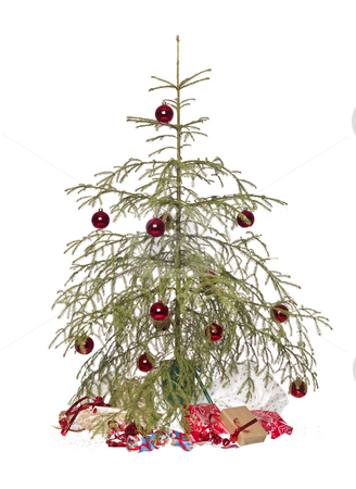 Christmas tree stock photo, Half dead christmas tree isolated on a white background by Anne-Louise Quarfoth