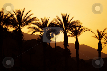 Sunset Palm Springs stock photo, Sunset, palm trees and mountains in lovely Palm Springs, California. by Mary Lane