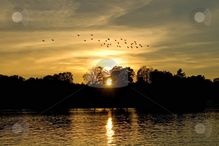 Sunset with Geese stock photo, Sunset over a quiet country lake with a flock of geese forming up to head south for the winter. by Mary Lane