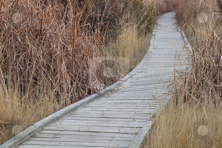 Nature trail in wetland stock photo, Winding nature trail - wooden boardwalk path through wetlands, fall scenery by Marek Uliasz