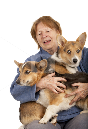 Senior lady with her Corgi puppies stock photo, Senior woman holding two active corgi puppies on her laps by Marek Uliasz