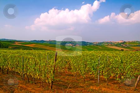 Vineyard stock photo, Landscape of a vineyard under cloudy sky by Fabio Alcini