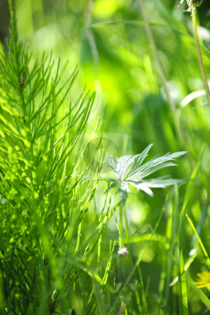 Green grass and plants stock photo, Closeup of green grass and plants in summer by Elena Elisseeva