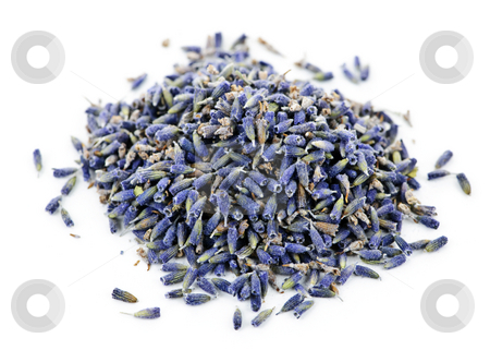 Dried lavender herb flowers stock photo, Pile of medicinal lavender herb flowers on white background by Elena Elisseeva