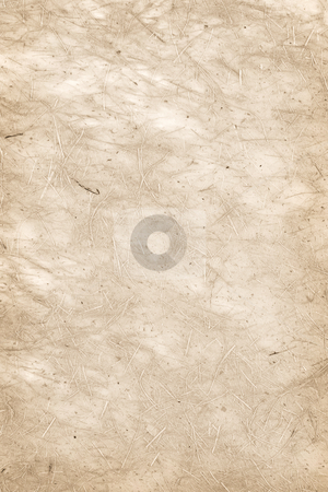 Parchment paper background stock photo, Background of blank vintage parchment paper sheet with fibers by Elena Elisseeva