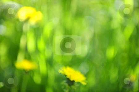 Blurred green background stock photo, Green grass blurred in-camera for natural background or or bokeh by Elena Elisseeva