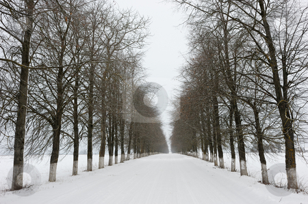 Rural road in winter stock photo, Winter day, snow-covered rural road with planted trees. by Vladimir Blinov