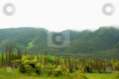 Greenery stock photo, Lush green mountains covered with dense fog by Arvind Balaraman