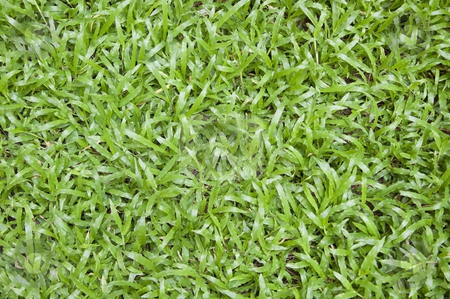Green grass background stock photo, Green grass background by Udomsak Insome