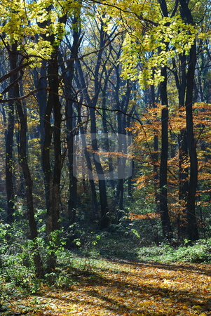 Autumn morning in forest stock photo, Small forest path through a autumn colored trees by zagart