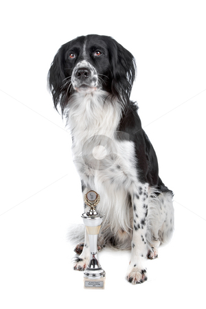 Mixed breed dog stock photo, Mixed breed dog and his prize sitting, isolated on a white background by Erik Lam