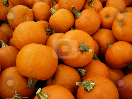Pumpkin Background stock photo, Pumpkins filling the frame by Wanda Anthony