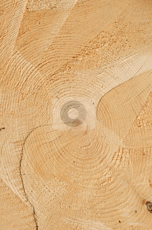 Fresh cut stock photo, Fresh cut just felled tree. by Dmitry Lameko