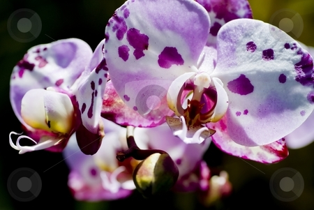 Spotty Orchid stock photo, Cute little spotted orchid. by Mary Lane