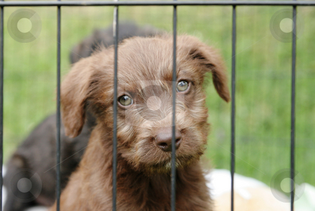 Pup in a pen stock photo, Cute pup looking out through the bars of his pen by suemack