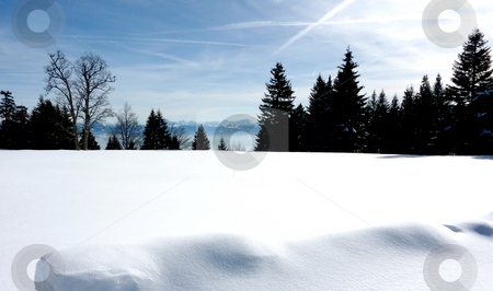 Alps behind fir trees by winter stock photo, Alps behind fir trees by winter by Elenarts