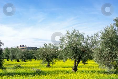 Landscape of alentejo region, Portugal. stock photo, Landscape of alentejo region, Portugal, near Mourao village. by Inacio Pires