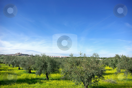 Landscape of alentejo region, Portugal. stock photo, Landscape of alentejo region, Portugal, near Mourao village. by Inacio Pires