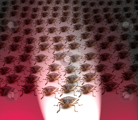 Army of Brown Stink Bugs stock photo, Large crowd of Brown Marmorated Stink Bug or Shield Bug spot lit with white beam against red background by Steven Heap