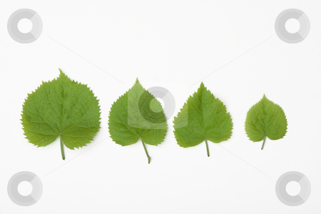 For different leaves stock photo, Front view of for different leaves in spring time by caimacanul