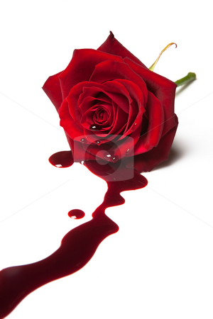 Bleeding rose stock photo, Red rose with blood flowing out of its heart by Anneke