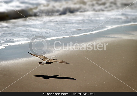 Coming In For Landing stock photo, Seagull gliding at the beach by Henrik Lehnerer