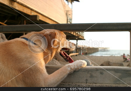 Dog at beach stock photo, A dog looking over the ocean at sunset near the beach in Ventura California by Henrik Lehnerer