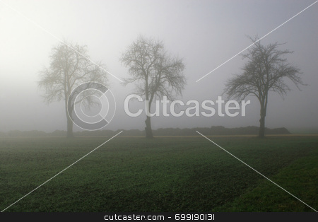 Three trees in fog stock photo,  by Georgios Alexandris