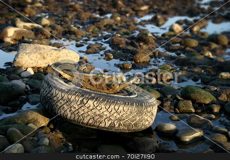 Used tire on beach stock photo, An old tire exposed by a low tide. by Henrik Lehnerer