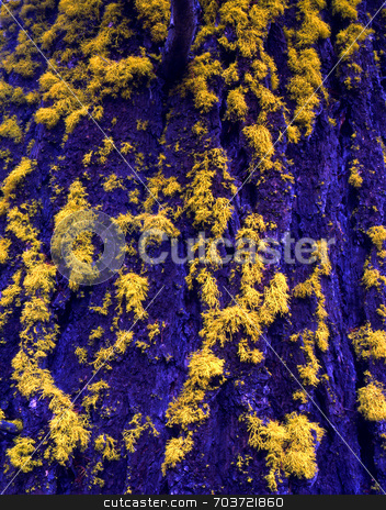 Blue Bark Yellow Lichen stock photo, The bark of a tree and lichen presented in strange colors. by Mike Norton