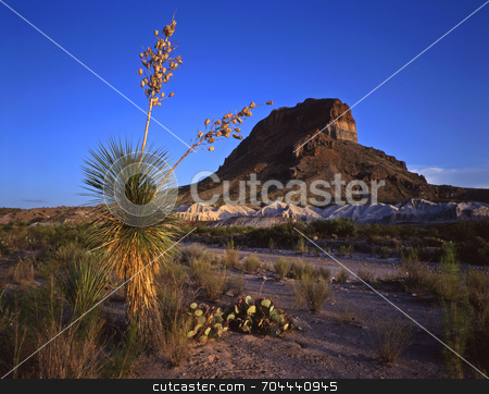 Castelon Peak and Soaptree Yucca stock photo, A soaptree yucca plant and Castelon Peak in Big Bend National Park, Texas. by Mike Norton