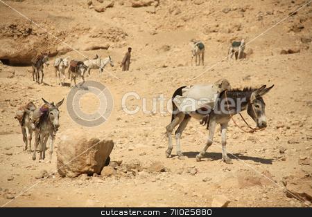 Donkey Work stock photo, A line of donkeys working hard near a temple in Luxor - Egypt. by Daniel Wiedemann
