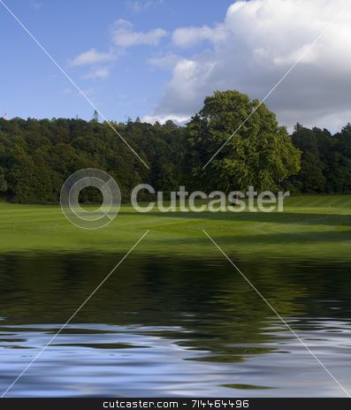Large Park, Big Tree stock photo, A large tree, isolate,  on a nice green park.  (with water reflection) by Daniel Wiedemann
