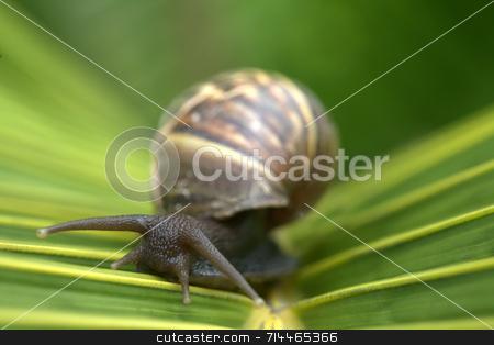 Snail on Leaf stock photo, A snail on a bright green palm tree leaf. by Daniel Wiedemann