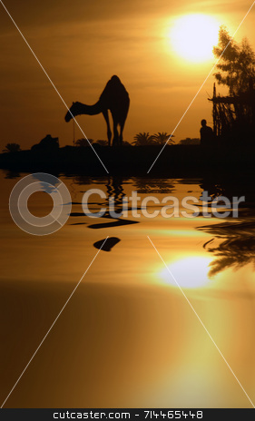 Camel and Reflection stock photo, A camel in Egypt with the water reflection. by Daniel Wiedemann