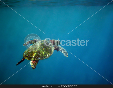 Deep Blue Sea stock photo, A very serene photograph of a sea turtle in the deep blue sea. by Daniel Wiedemann