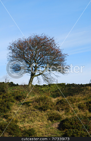 Lonely Tree stock photo, A solitary tree in the English countryside by Philippa Willitts