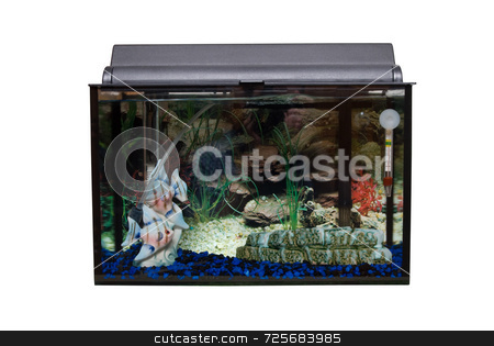 Isolated Fishtank stock photo, A glass rectangular fishtank isolated against a white background by Richard Nelson