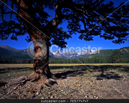 Tree Mountains & Moon stock photo, A pine tree mountains and the full moon photographed in Rocky Mountain National Park, Colorado. by Mike Norton