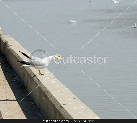Seagull Eating Food stock photo, A single seagull eating a big piece of bread by Richard Nelson