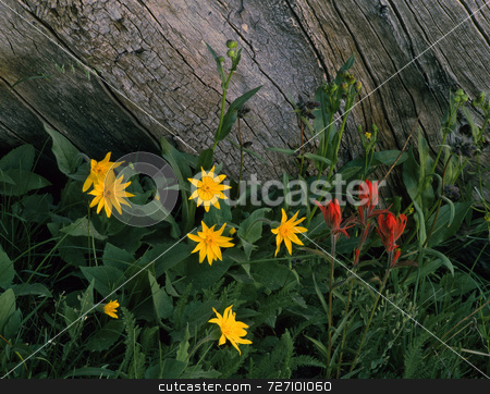 Wild Flowers and Log stock photo, Wild flowers growing next to an old log. by Mike Norton
