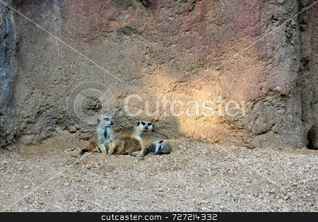 Meerkat Family stock photo, A meerkat family that is huddled togeather in the shade by Kevin Tietz