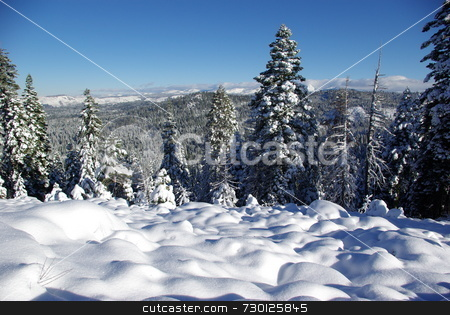 Trees covered in fresh snow  stock photo, Trees covered in fresh snow looking towards the Sierra Crystal Range by Lynn Bendickson