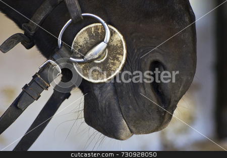 Horse bit stock photo, Close-up of an horse bit by Massimiliano Leban