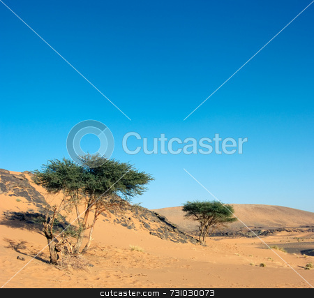 Acacias In The Desert stock photo, Two Acacias in the Desert in Morocco by Jan-Peter Von Hunnius
