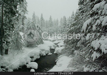 Winter Mountain Scene stock photo, A mountain stream flowing through a tree and snow covered landscape in a snowstorm by Lynn Bendickson