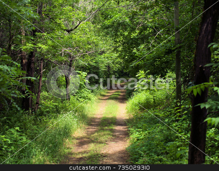 Path in the woods stock photo, Path in the Woods by Michelle Bergkamp
